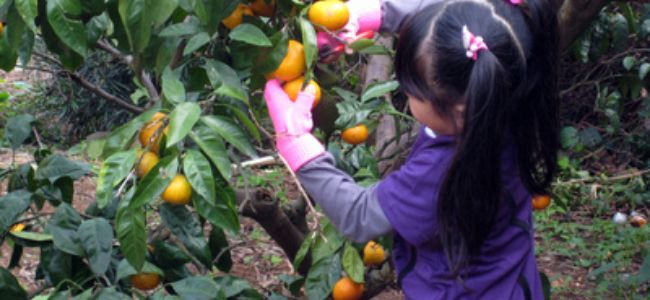 宿泊・農業体験の案内